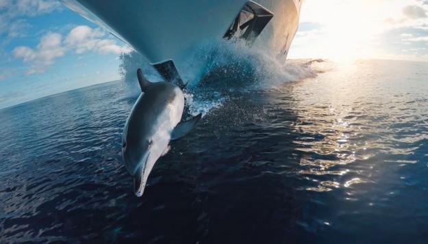 Expériences naturelles: naviguer avec des dauphins