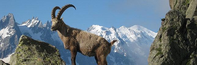 10 animaux extraordinaires aux pouvoirs hallucinants