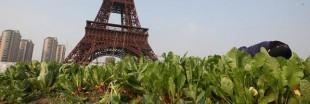 Nourrir les villes, l'exemple de Paris