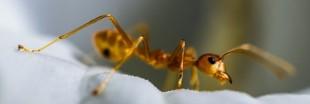 L'épilation définitive à la crème aux oeufs de fourmi : une arnaque ?