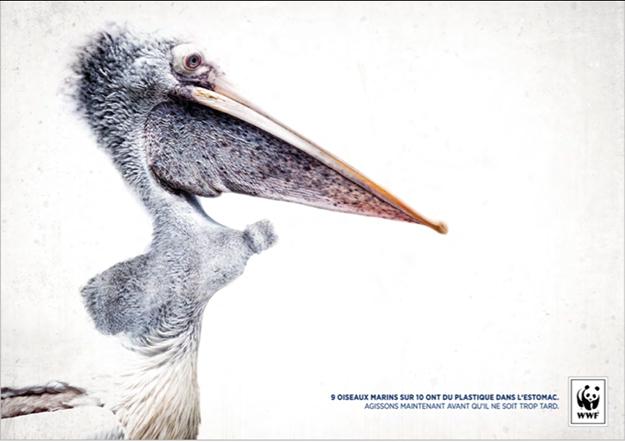 les océans pelican