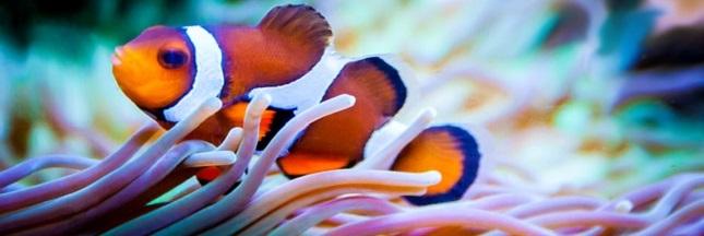 Les «Points chauds » de la biodiversité