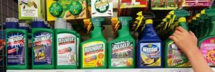 Roundup : l'Europe prolonge l'autorisation de vente de l'herbicide polémique