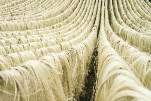 La soie d'agave est une alternative végétale à la soie obtenue à partir des vers