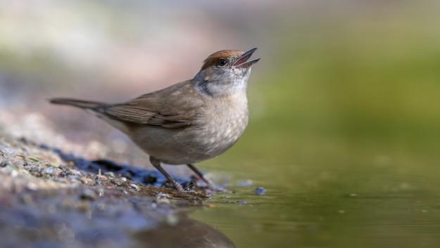 Certains oiseaux perçoivent des infrasons des futures tempêtes