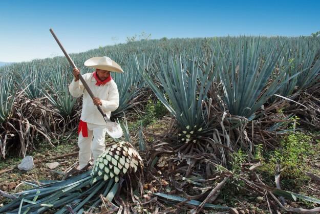 soie d'agave, un tissu vegan fait à partir de cactus