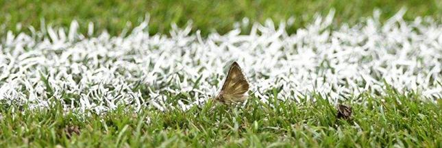 Euro 2016 : le stade de France couvert de papillons de nuit !