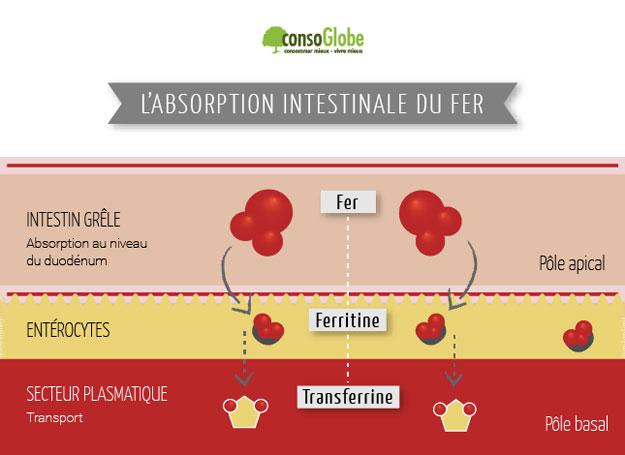 absorption-fer