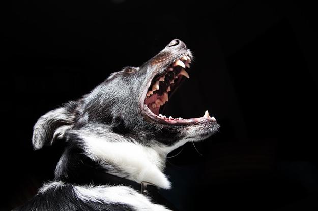 animal-dog-pet-dangerous-biodiversite-animaux