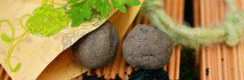 Comment fabriquer une bombe de graines