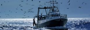 Ressources halieutiques : la pêche en eaux profondes interdite en Europe