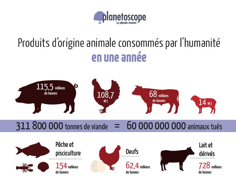 Consommation mondiale de viande