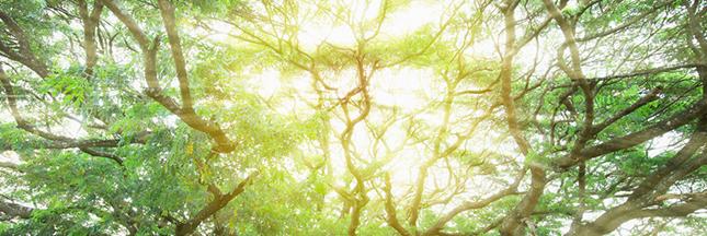 Environnement : la couche d'ozone se répare progressivement