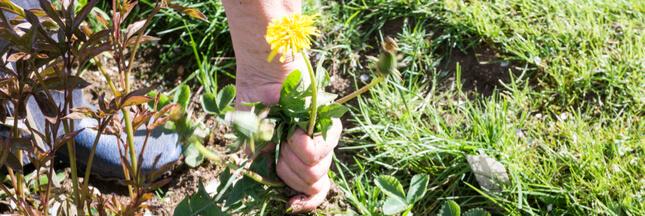 Identifier les 'mauvaises herbes' pour les éliminer mieux!