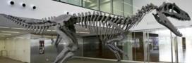 Découverte en Argentine de Gualicho, le dinosaure 'maudit'