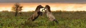 Les 10 plus beaux troupeaux de chevaux sauvages