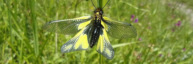 Loi pour la reconquête de la biodiversité : adoption après 4 années d'hésitation