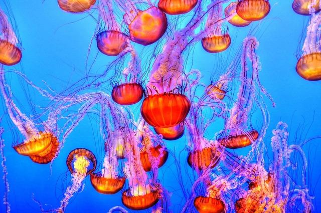 manger méduse