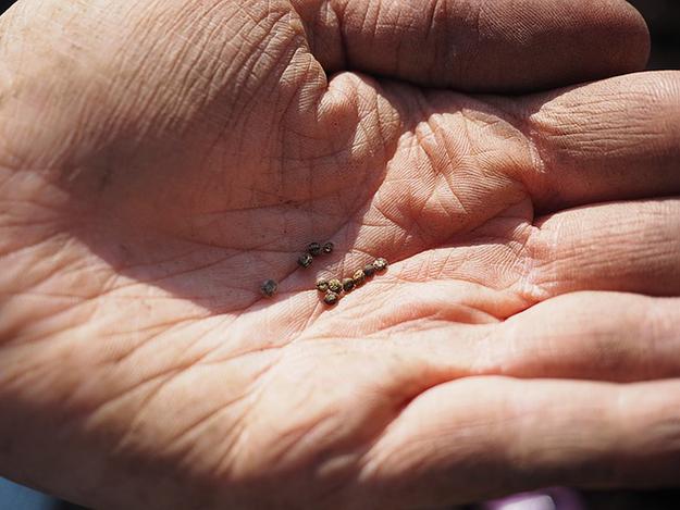 reconquête de la biodiversité graines et semences