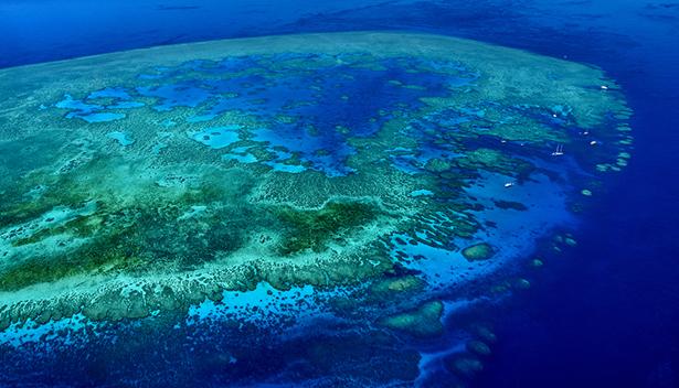 La grande Barrière de corail effondrement des ecosystèmes vue du ciel