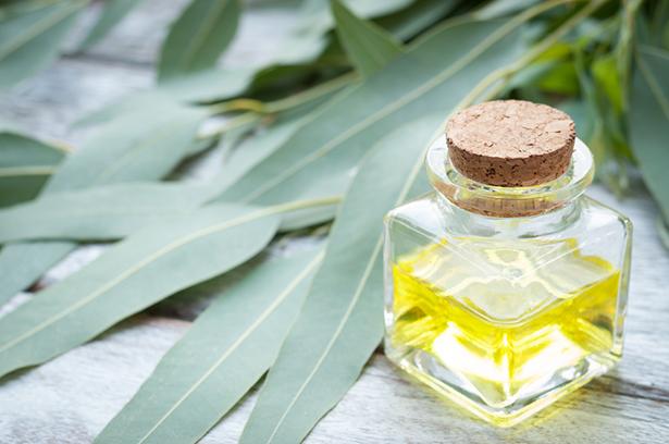 trousse aromathérapie huile essentielle d'eucalyptus