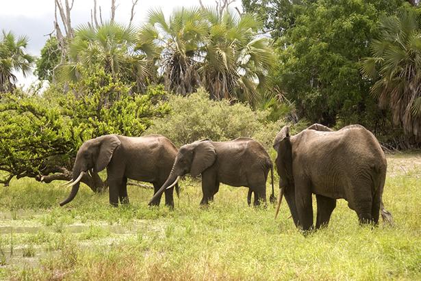 patrimoine mondial éléphant Selous Tanzanie