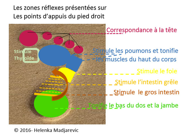 zones-réflexes-points-d-appuis