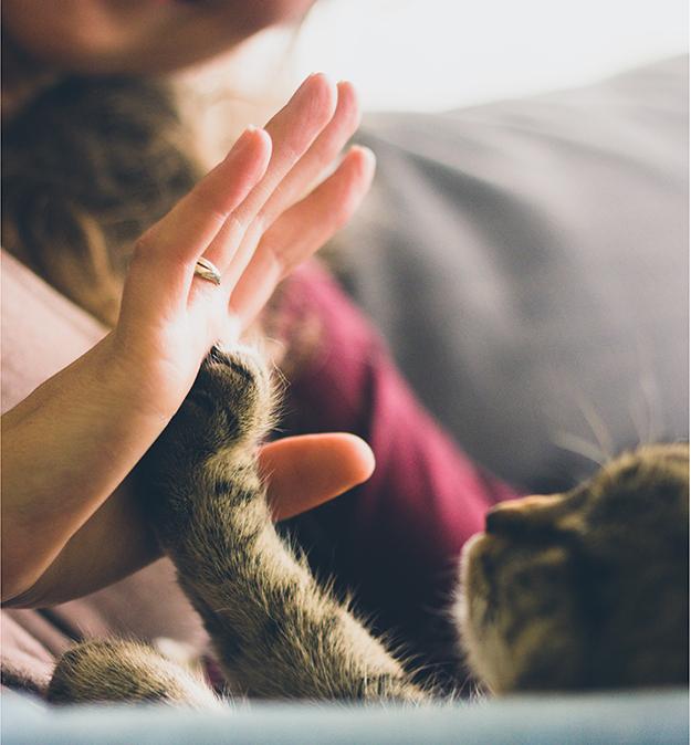 adopter un chat, gratitude, marque d'amour
