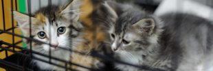 Nos recommandations pour adopter un chat