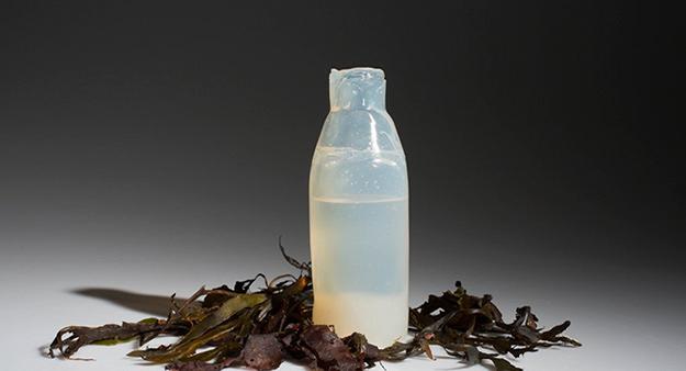 bouteille algues Ari Jonsson