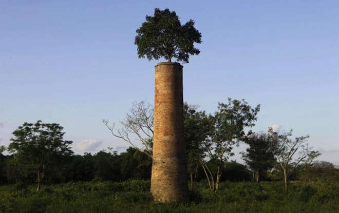 arbres usine abandonnée