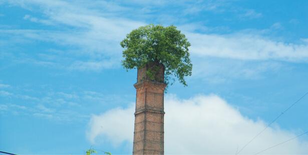 la nature reprend ses droits