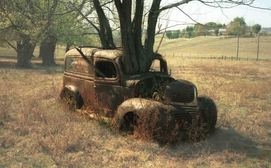 arbre voiture belles photos