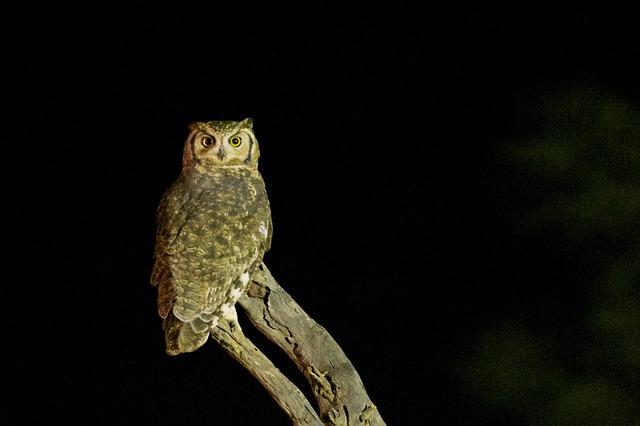 biodiversité nocturne