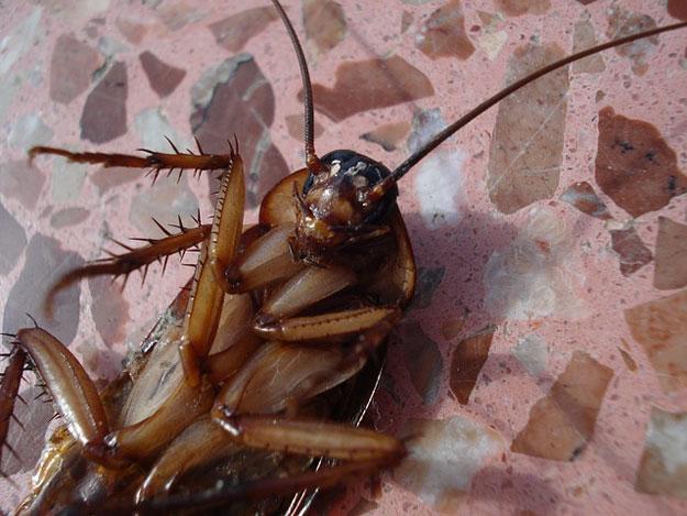 blattes-maison-astuces
