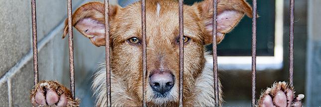 Des milliers d'animaux attendent dans les refuges : adoptez-les