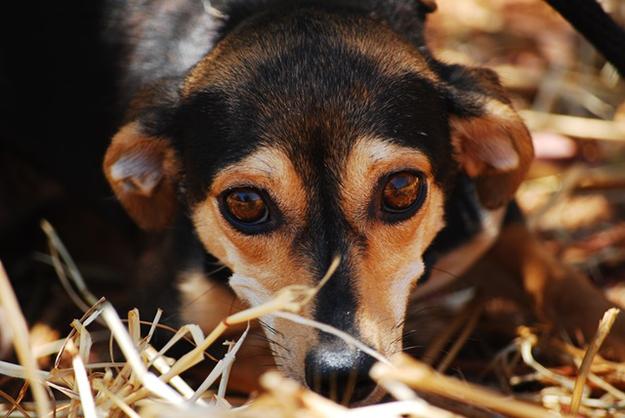 animal de refuge: petit chien abandonné