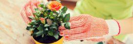 4 astuces simples à connaitre pour embellir les plantes