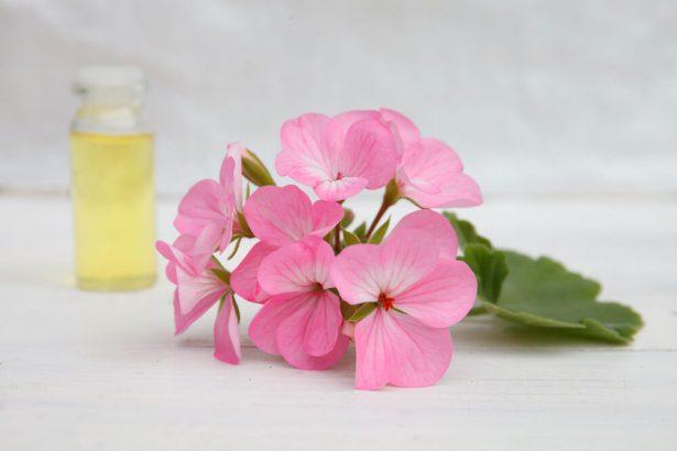 huile essentielle moustique