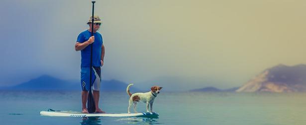 animaux de refuge chien compagnon