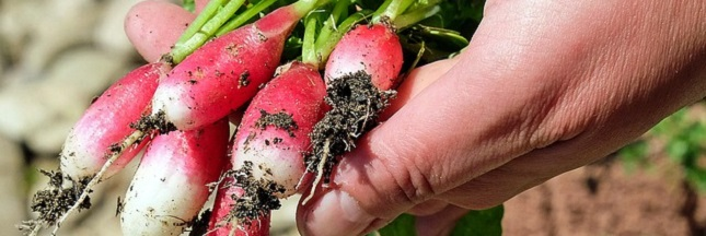 Quand les hôpitaux produisent leurs fruits et légumes