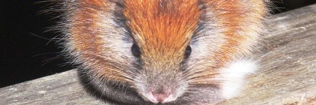 À la recherche d'une espèce disparue en Colombie