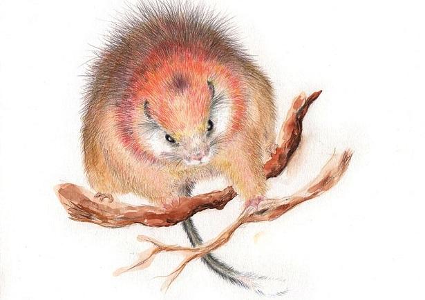 rat arboricole espèce disparue