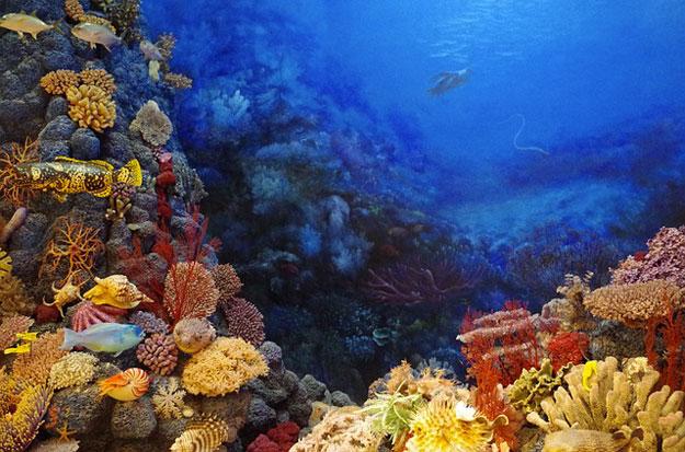 saisie-corail-pays-bas