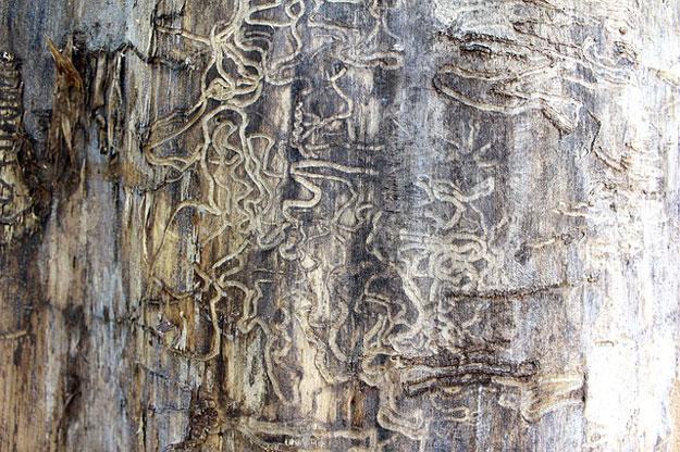 termites-maison-astuces