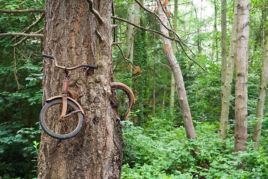 vélo abaondonné arbre