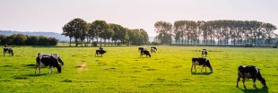 L'agriculture cellulaire : une alternative plausible à l'élevage ?