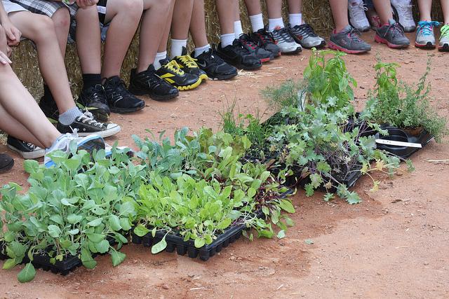 jardinage école