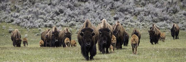 États-Unis : les Sioux manifestent contre la construction d'un oléoduc géant