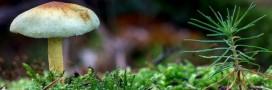 5 manières de sauver la planète avec les champignons